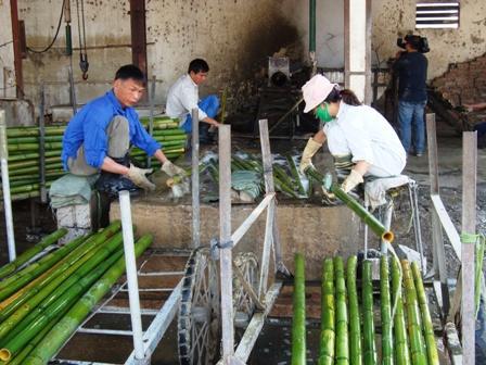 Lavorazione Del Bamb.Conoscere Il Bamboo Il Suo Utilizzo Nel Tessile Dalla